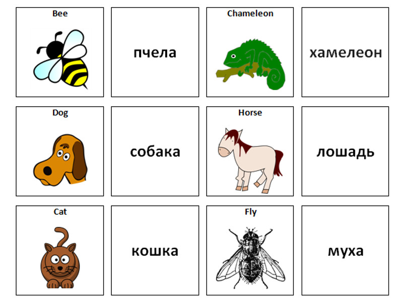 Animals: Russian Vocabulary Card Sort