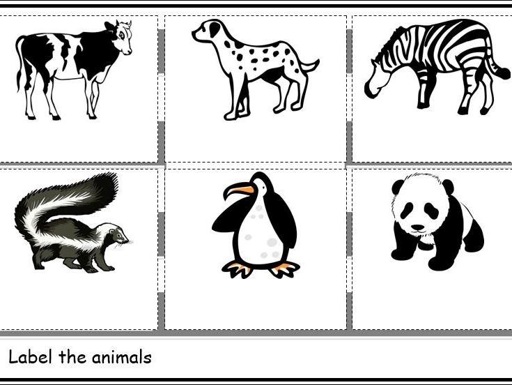 Animals that are Black and White Worksheets
