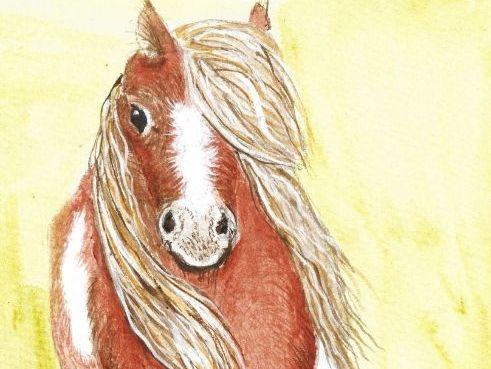 Brian the shetland pony