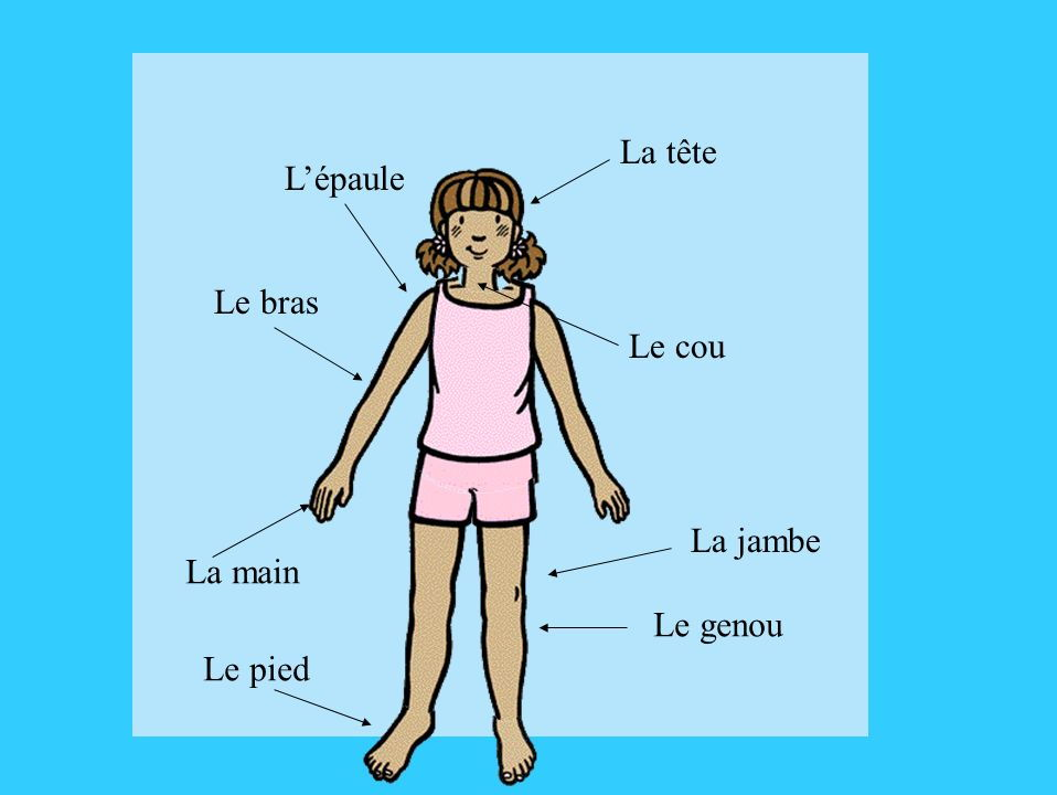 Les Parties du Corps - parts of the body, plus activities