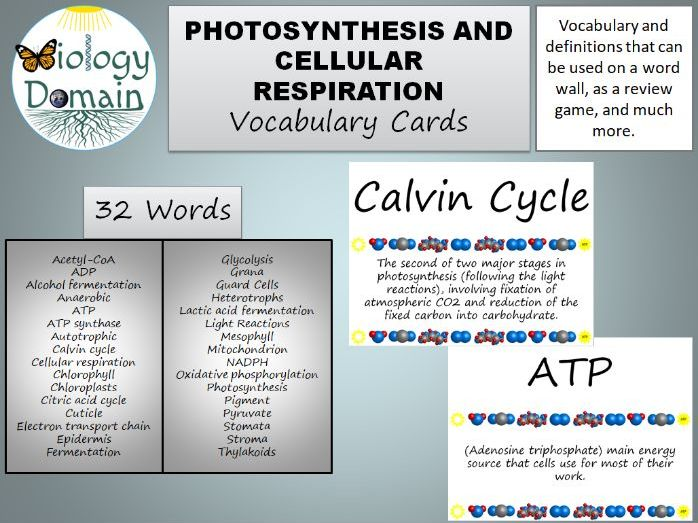 Photosynthesis And Cellular Respiration Bundle By Biologydomain