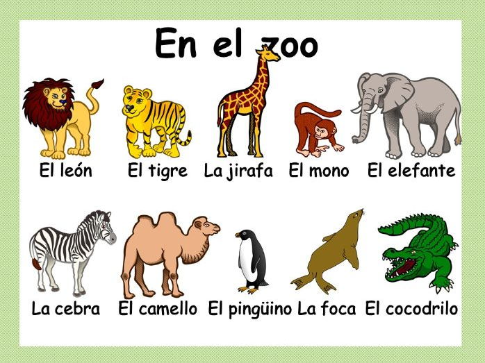 En el zoo / Zoo animals in Spanish