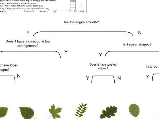 Leaf classification - three levels of worksheet and slides