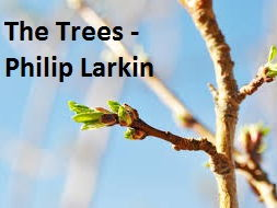 The Trees - Philip Larkin (Poetry Lesson, Songs of Ourselves)