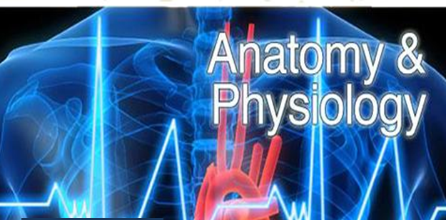 unit 4  anatomy and physiology for health and social care