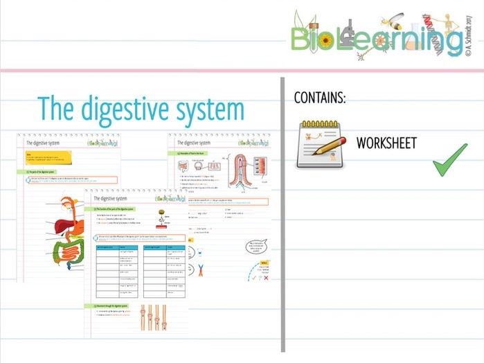 The digestive system - Worksheet (KS3/KS4)