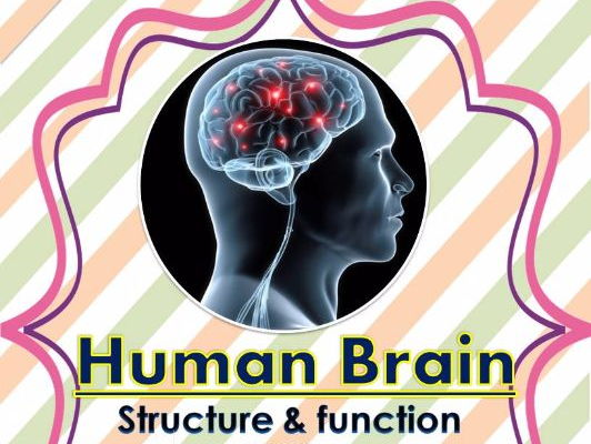 Human brain structure functions unit with worksheets cover image ccuart Gallery