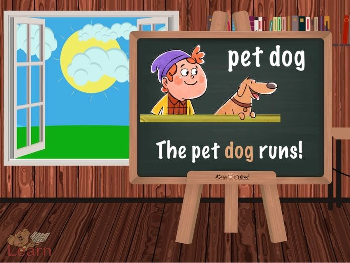 Pets Session