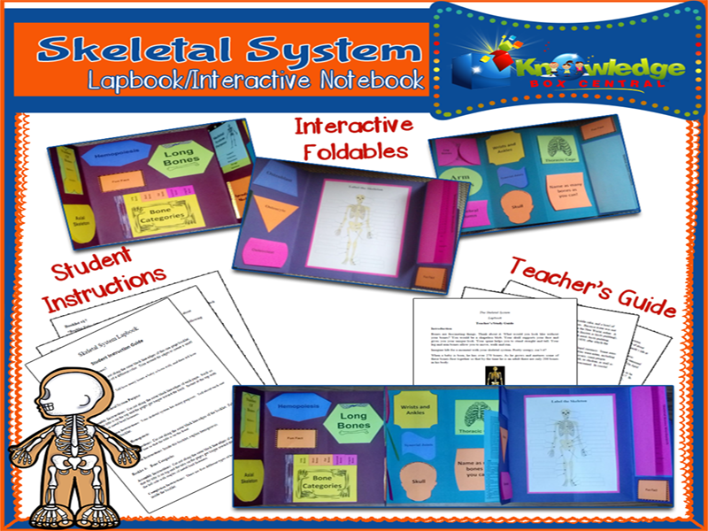 Skeletal System Lapbook