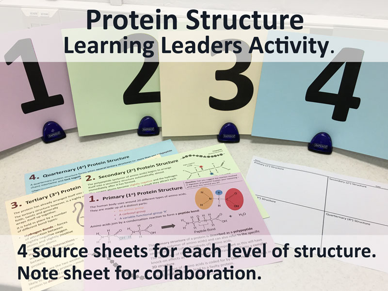 A Level Biology - Protein Structure - Learning Leaders Activity