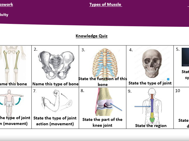 Muscular System Teaching Pack