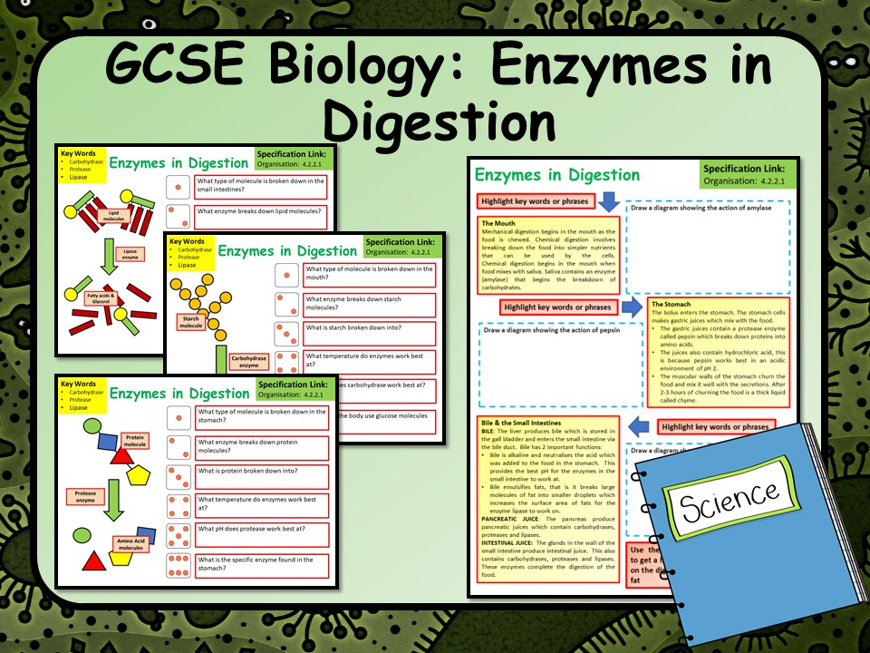 AQA GCSE Biology (Science) Enzymes in Digestion Lesson