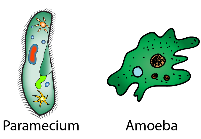 8D Unicellular organisms (Exploring Science)