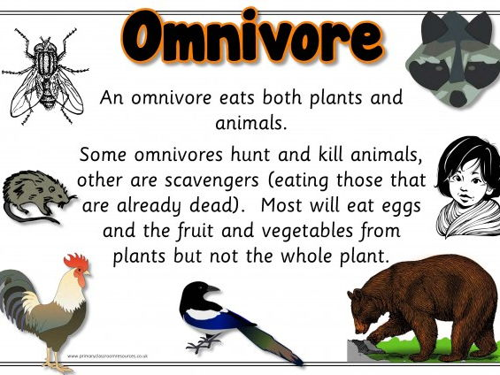 Carnivore Herbivore Omnivore Display Set