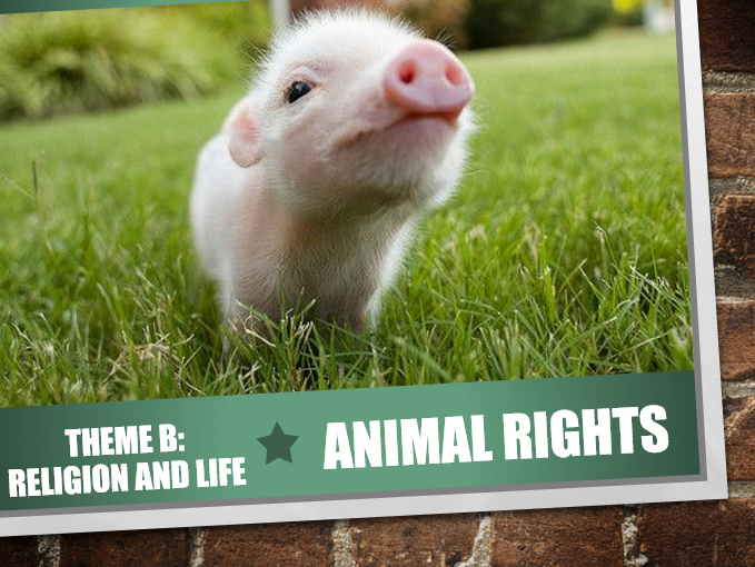 AQA Theme B Religion and Life 6: Animal Rights