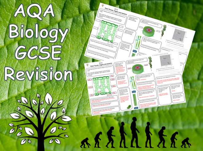 4.2.3 Plant Tissues, Organs and Systems - AQA Science Trilogy (Biology) Revision with Answers