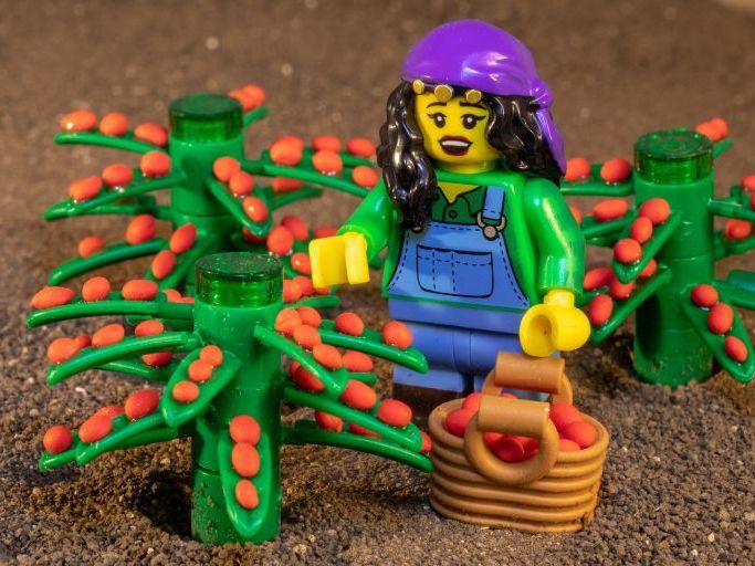 Coffee Production Explained using Lego