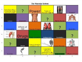 GCSE P.E. Muscular System Learning Grid