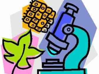 AQA GCSE Higher Biology: Cell Biology Flashcards