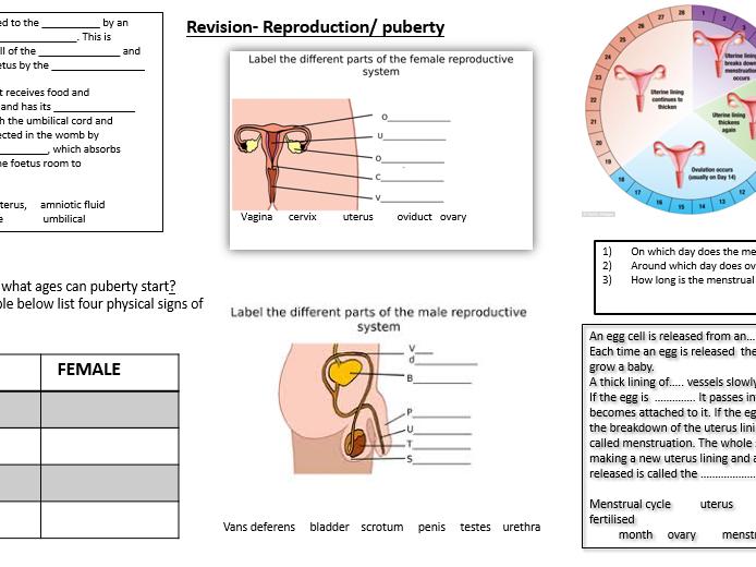 Revision Puberty/reproduction/fertilisation and gestation