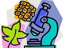 NEW AQA Biology - 4.6 Inheritance, Variation and Evolution Complete Unit
