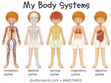 Body Systems - Who We Are