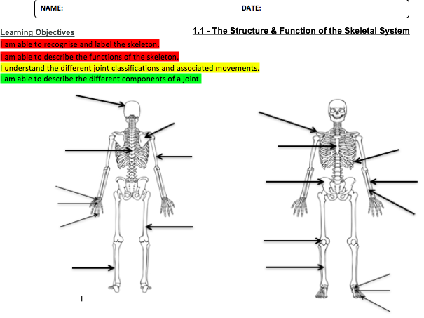 Skeletal System: The Structure & Function.  1.1 A OCR GCSE PE