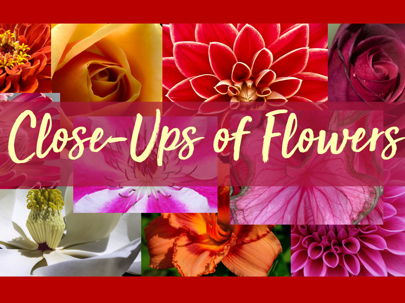 Close Ups of Flowers Photobank / Image Library