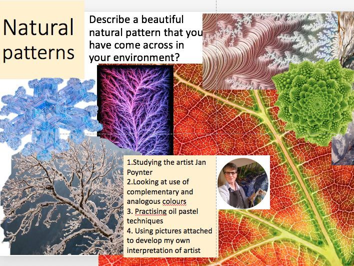 Jan Poynter Natural patterns, fractal patterns using oil pastels with examples of nature pics