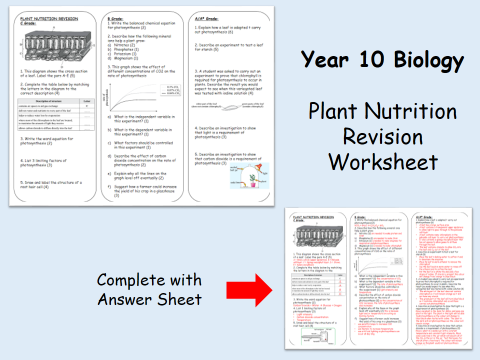 Density Problems Worksheet With Answers Pdf Year  Biology  Plant Nutrition Revision Graded Worksheet With  Meiosis Diagram Worksheet Pdf with Long Division Worksheets And Answers Word Year  Biology  Plant Nutrition Revision Graded Worksheet With Answers  By Megan  Teaching Resources  Tes Preschool Language Arts Worksheets Excel