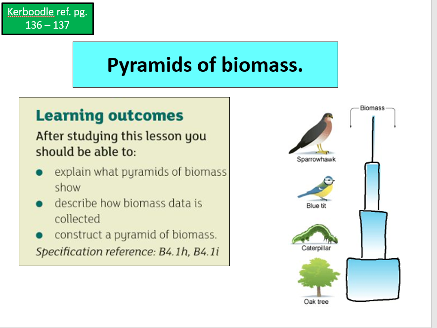 Pyramid of numbers and biomass