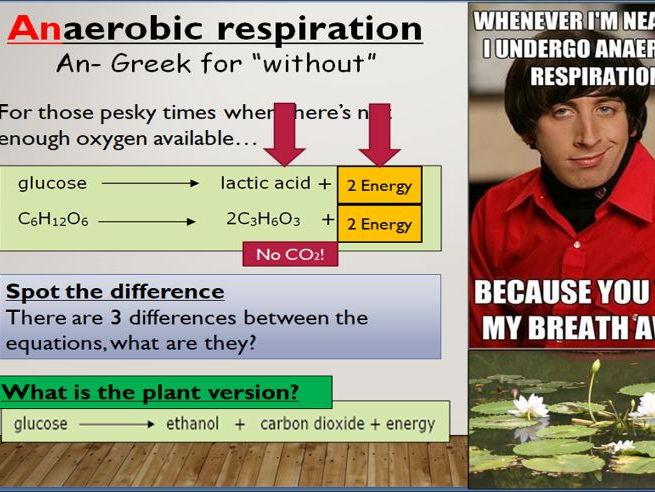KS4 9.3 Anaerobic respiration