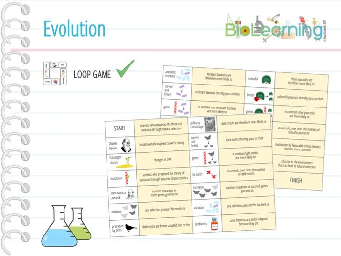 Evolution - Loop Game (KS3/KS4)