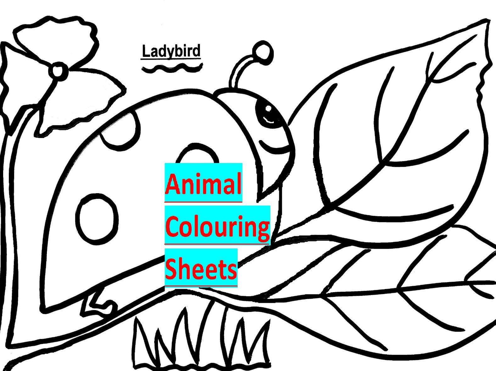 7 Animal Colouring Sheets