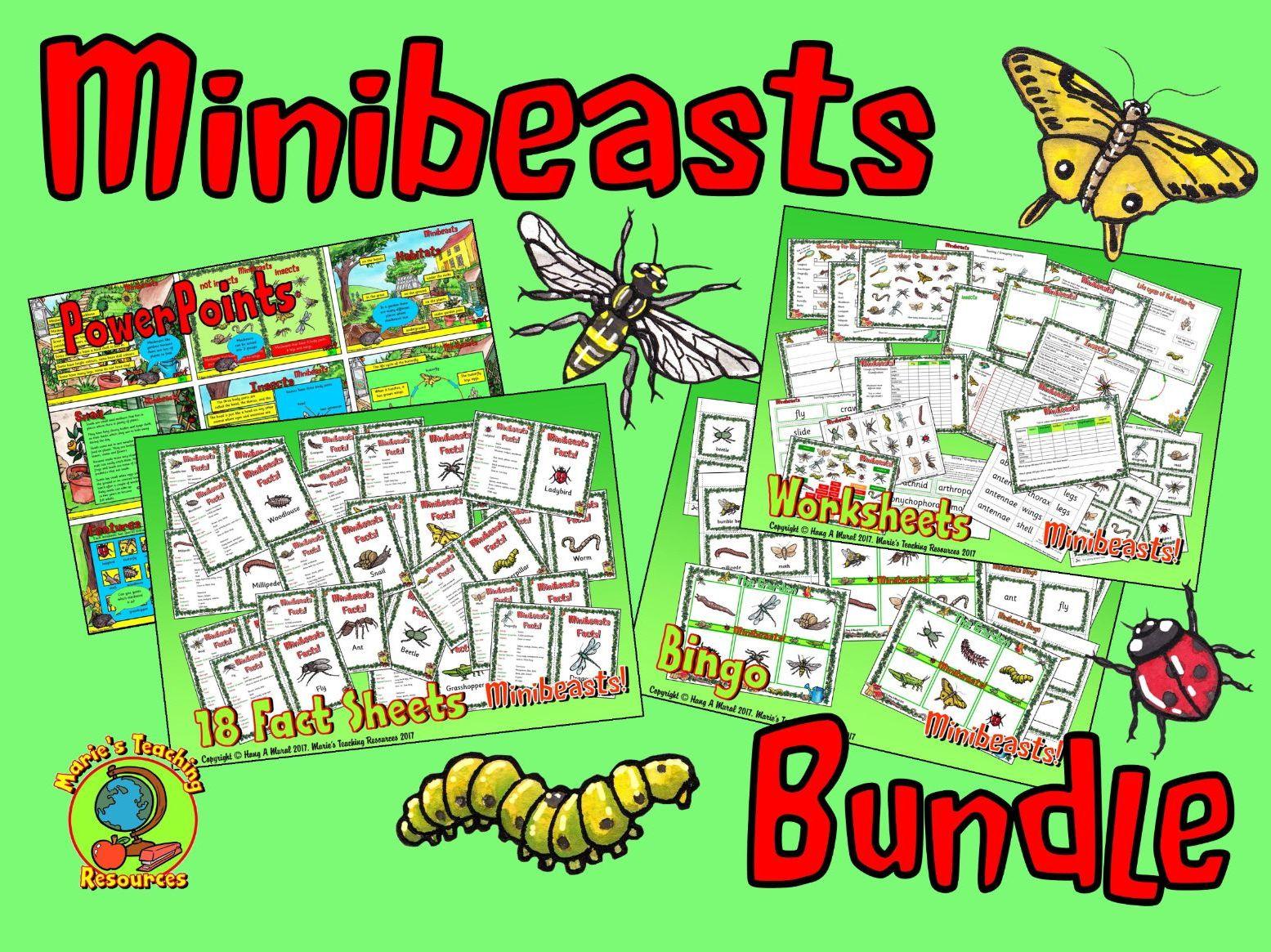 Minibeasts Bundle