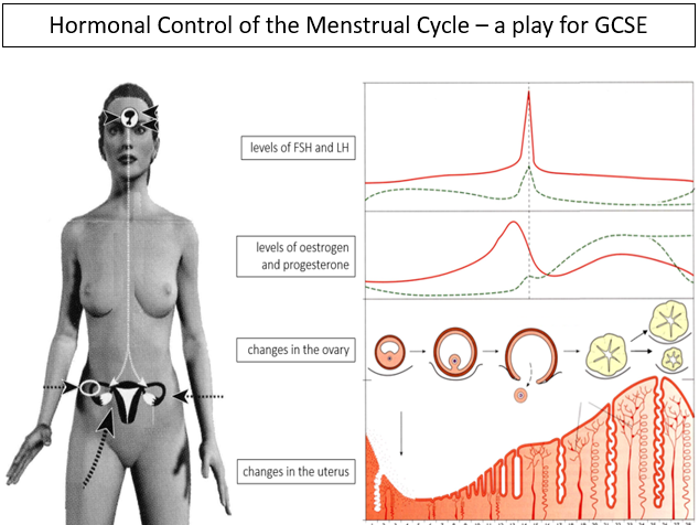 The Menstrual Cycle and its control - a play for GCSE
