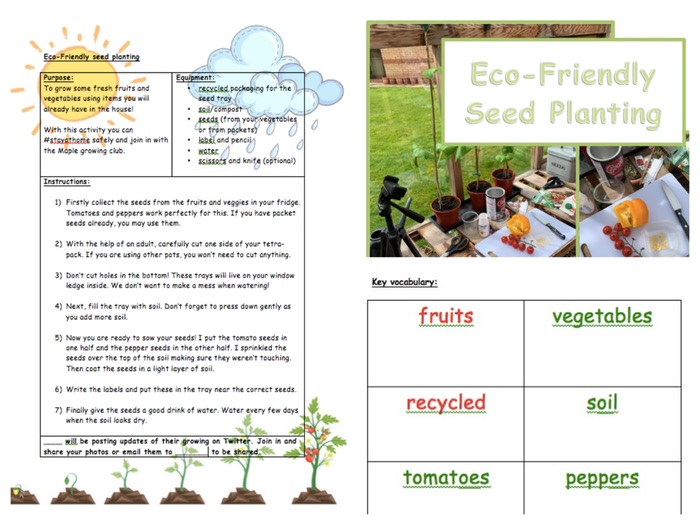 Eco-Friendly Seed Planting Activity