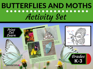 Butterfly and Moth Activity Set (Home Learning, Distance Learning)