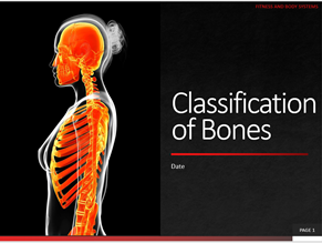 2. Classification of Bones