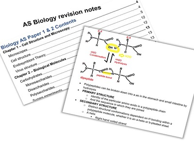 A Level Biology COMPLETE Revision Notes - AS and A2 || 220 pages
