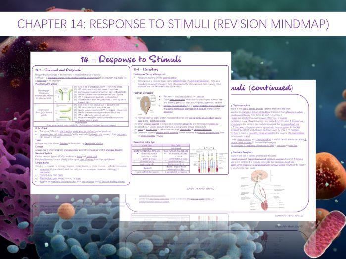AQA A-Level - Biology : 14 - Response to Stimuli (Revision Mindmap)
