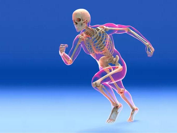 BTEC Sport Skeletal System