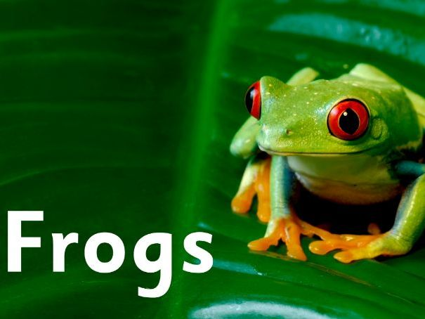 Frogs - Lifecycle and fun facts