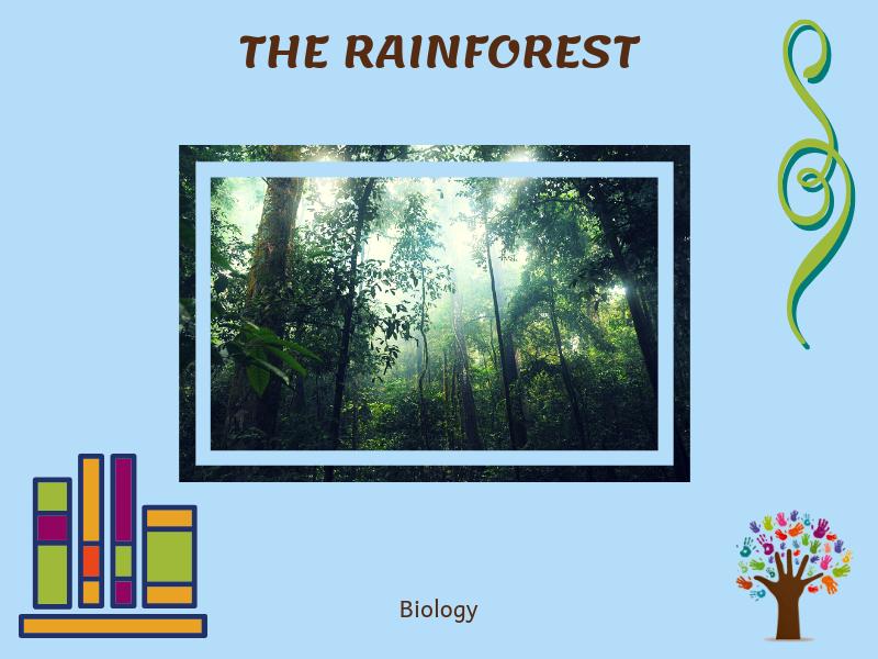 The Rainforest Montessori Discussion Cards