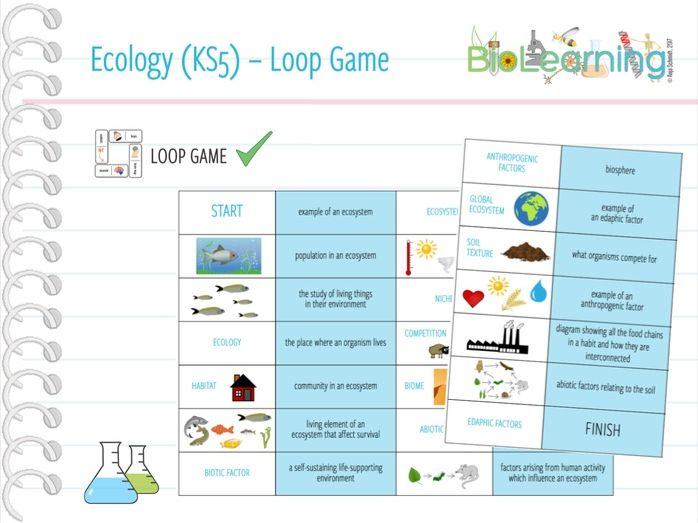 Ecology - Loop Game (KS5)