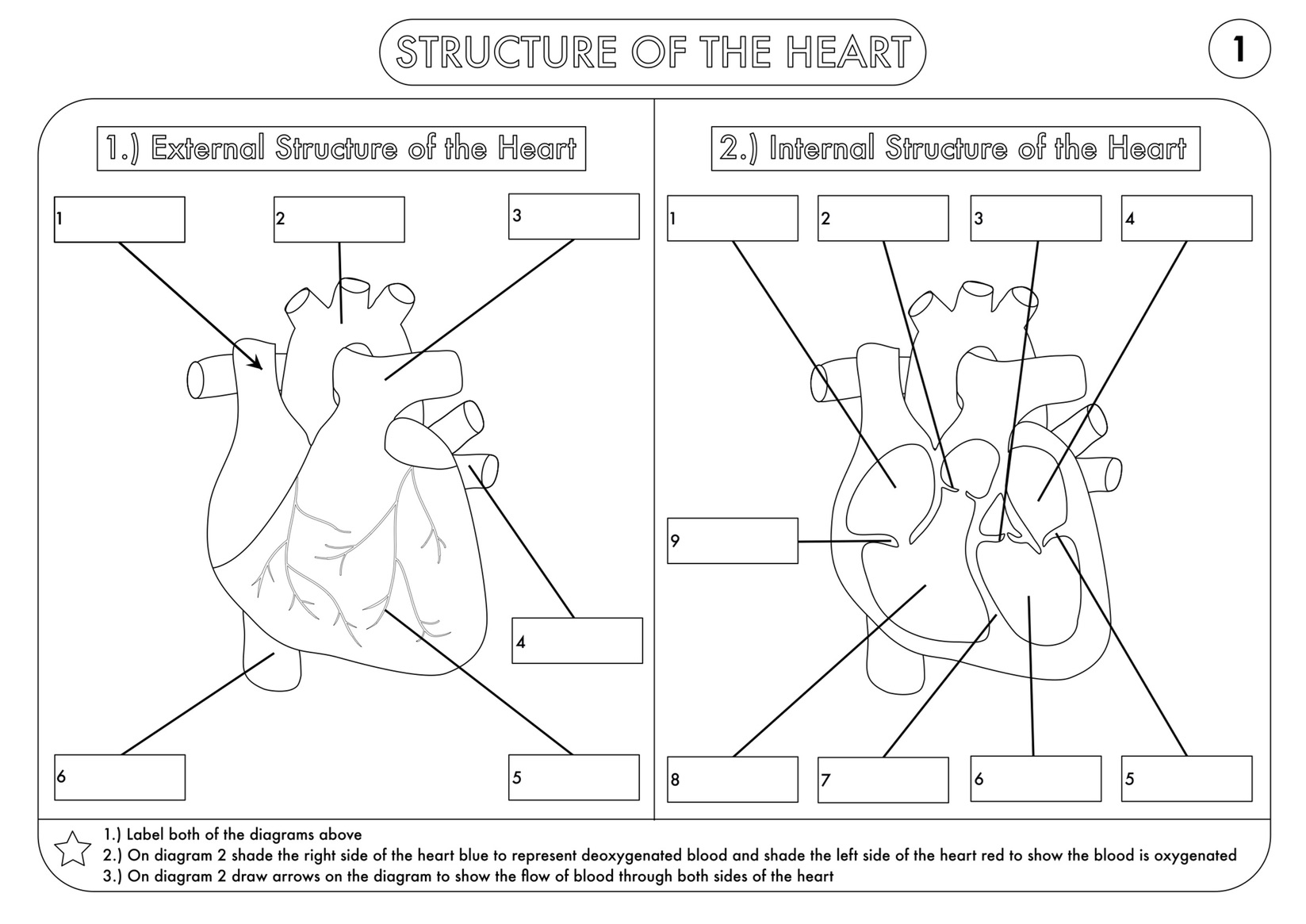 A Level Biology Worksheet Pack on Heart Structure and the Cardiac – Structure of the Heart Worksheet Answers