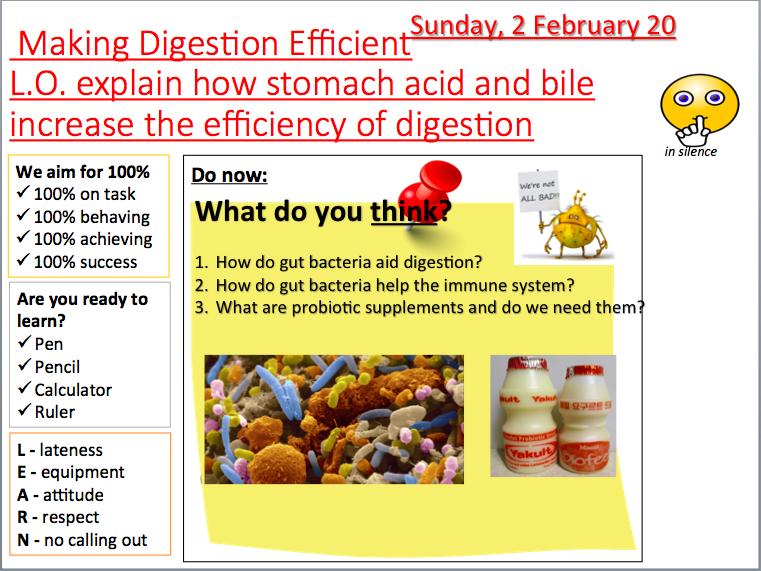 AQA B3.7 Making digestion efficient