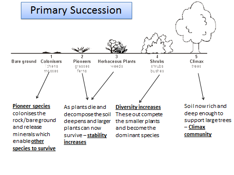 6.3.1 Ecosystems OCR A level Biology (7-8 lessons)