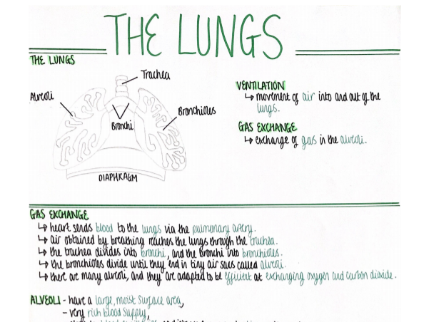 The Lungs (Organisation) Revision Poster [AQA GCSE Biology Double and Triple 9-1]