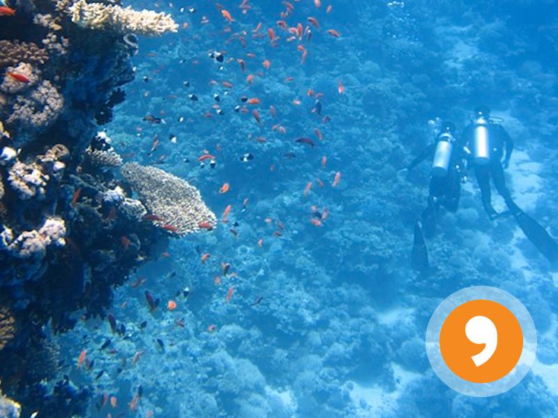 Me Gusta Nadar - I Like Swimming - Worksheet